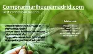 Catálogo THC y Más
